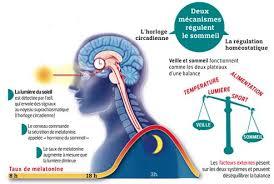 Hypnose et cycle circadien